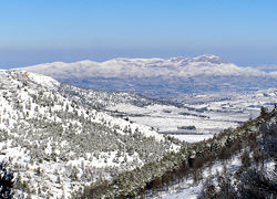 deep-freeze-destroys-15-percent-of-olive-harvest-in-el-comtat