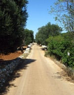 on-the-ancient-path-of-olive-oil-in-puglia