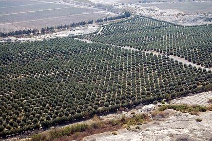 andalusia-leads-european-forum-of-olive-regions