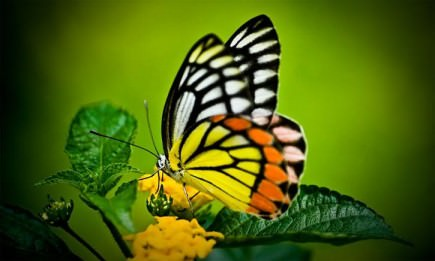 the-butterfly-effect-in-the-olive-oil-industry