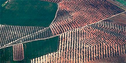more-organic-olive-groves-in-andalusia