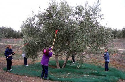 going-organic-in-andalusia