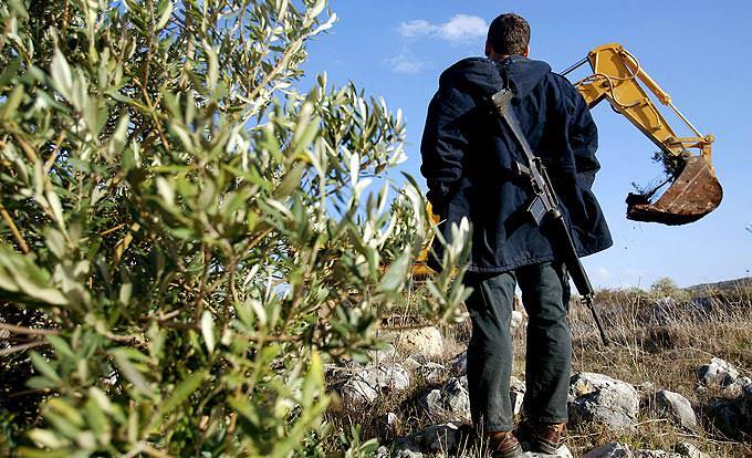 make-olive-oil-not-war