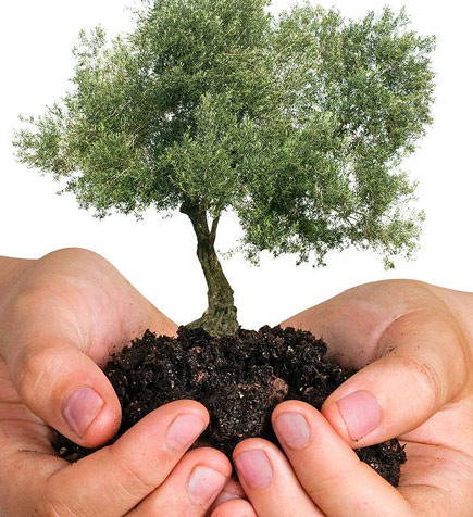 an-olive-tree-for-every-home-in-la-rioja-argentina