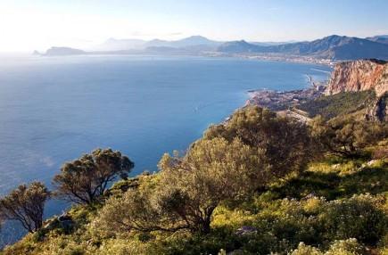 sicilian-olive-oil-seeks-pgi-certification