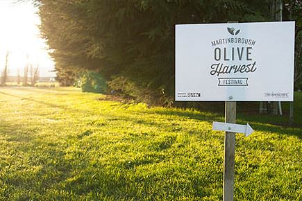 an-olive-harvest-festival-in-new-zealand-an-olive-harvest-festival-in-martinborough