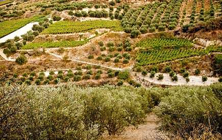 greece-turns-away-cretan-olive-oil-producers-seeking-aid-greek-government-turns-away-cretan-olive-oil-producers