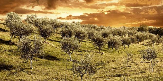 spain-produces-8700-tons-in-first-month-of-new-olive-oil-season-spain-produces-8700-tons-in-first-month-of-new-olive-oil-season