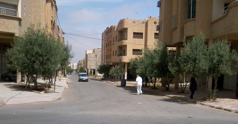moroccan-city-bans-olive-trees-citing-allergy-concerns