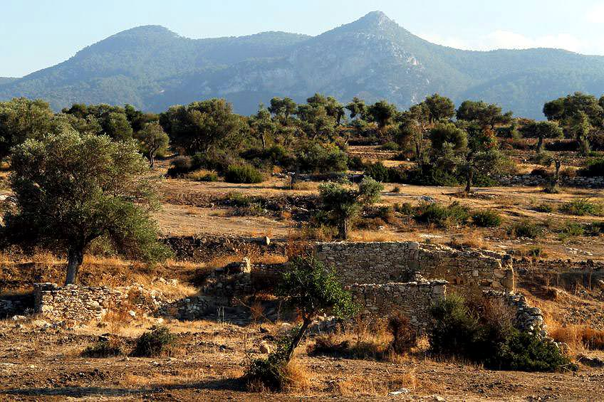 two-sides-of-cyprus-meet-halfway-in-the-name-of-olive-oil