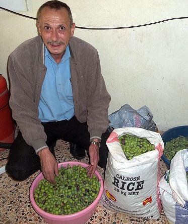 a-palestinian-mans-longawaited-olive-harvest