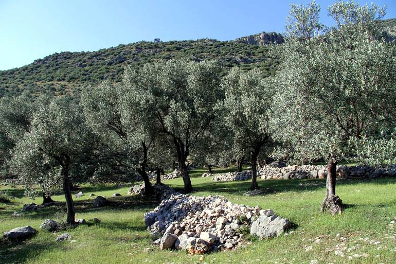 nar-gourmet-debuts-mobile-olive-oil-production-truck
