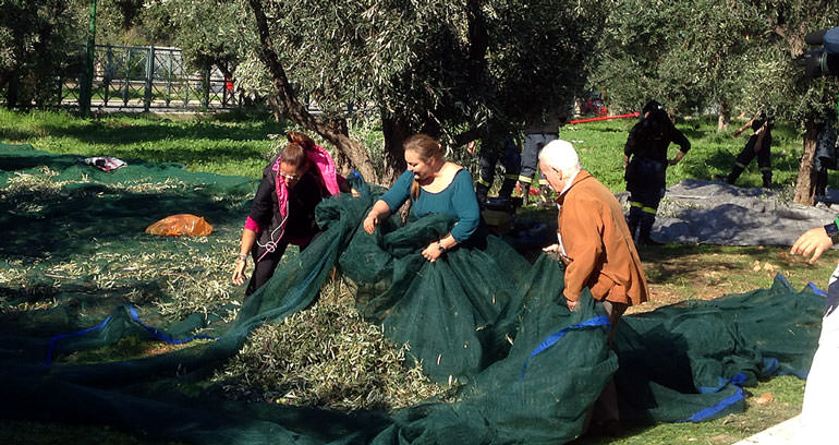 in-greece-volunteers-provide-olive-oil-for-families-in-need