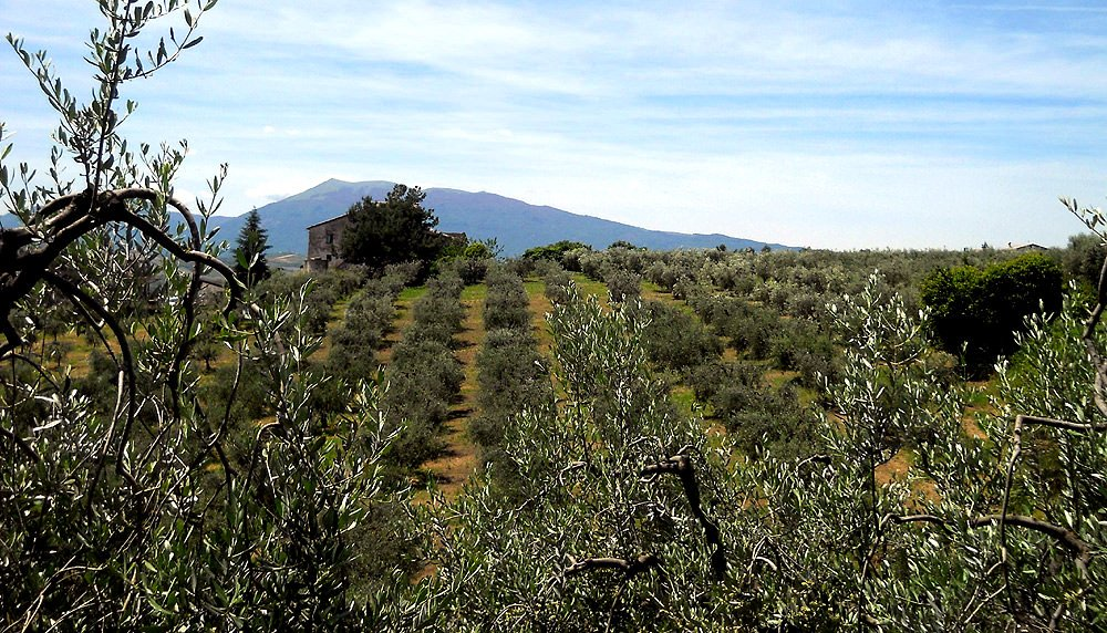 5th-edition-of-extrascape-celebrates-olive-landscapes