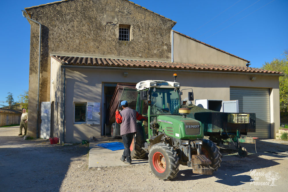 making-olive-oil-in-france-the-ancestral-way