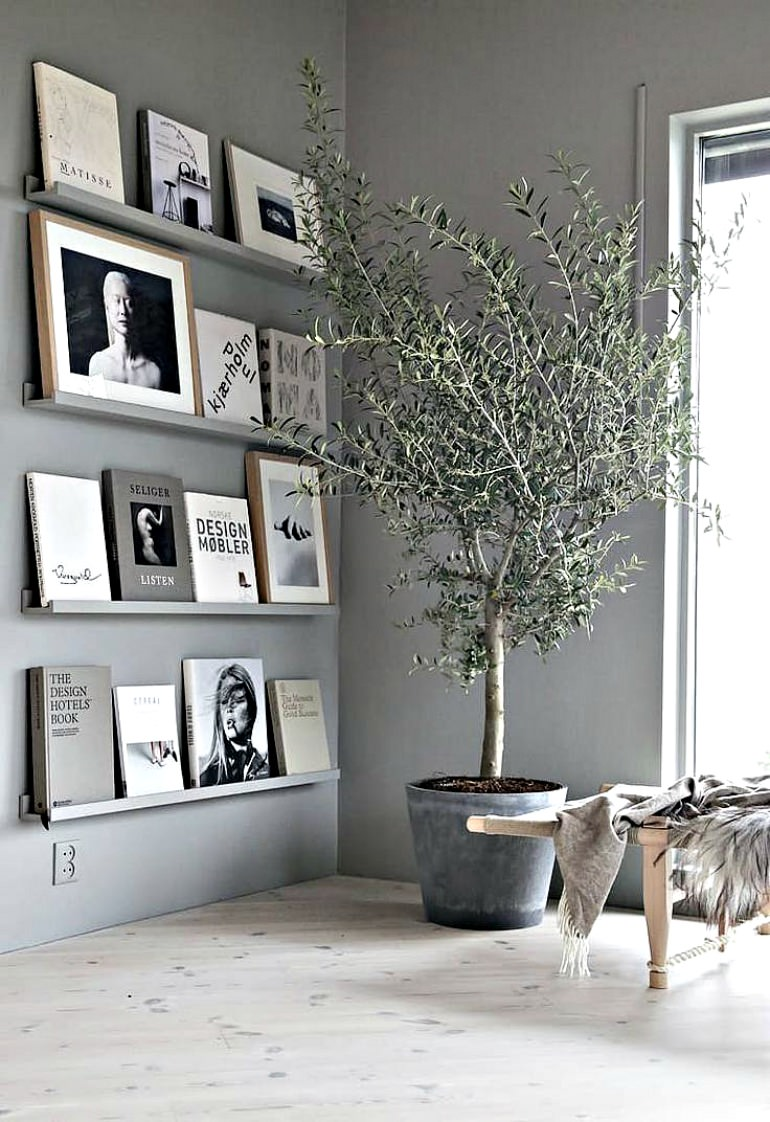 indoor-olive-trees-are-trending